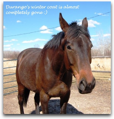 durango the horse