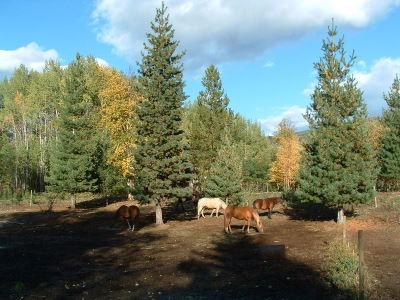 Harding Heights Ranch Herd