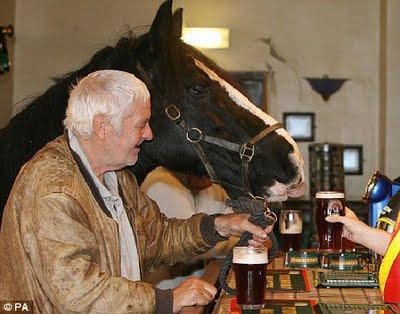 horse in a pub