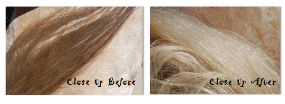 horse whitener, before and after